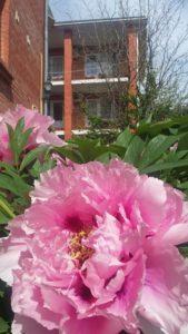 """цветок на клумбе в отеле """"Вилла Блюз"""""""