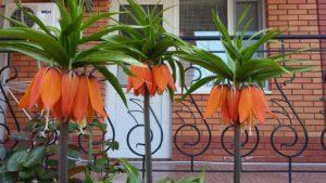 интересные цветы в Коктебеле