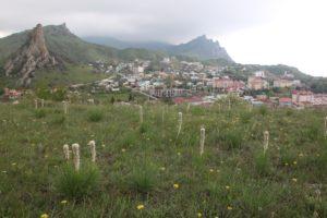 домики в Крыму