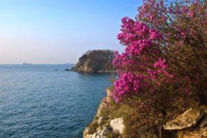 цветущее дерево на берегу в Крыму в мае