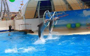 дельфины выпрыгивают из воды в Коктебеле